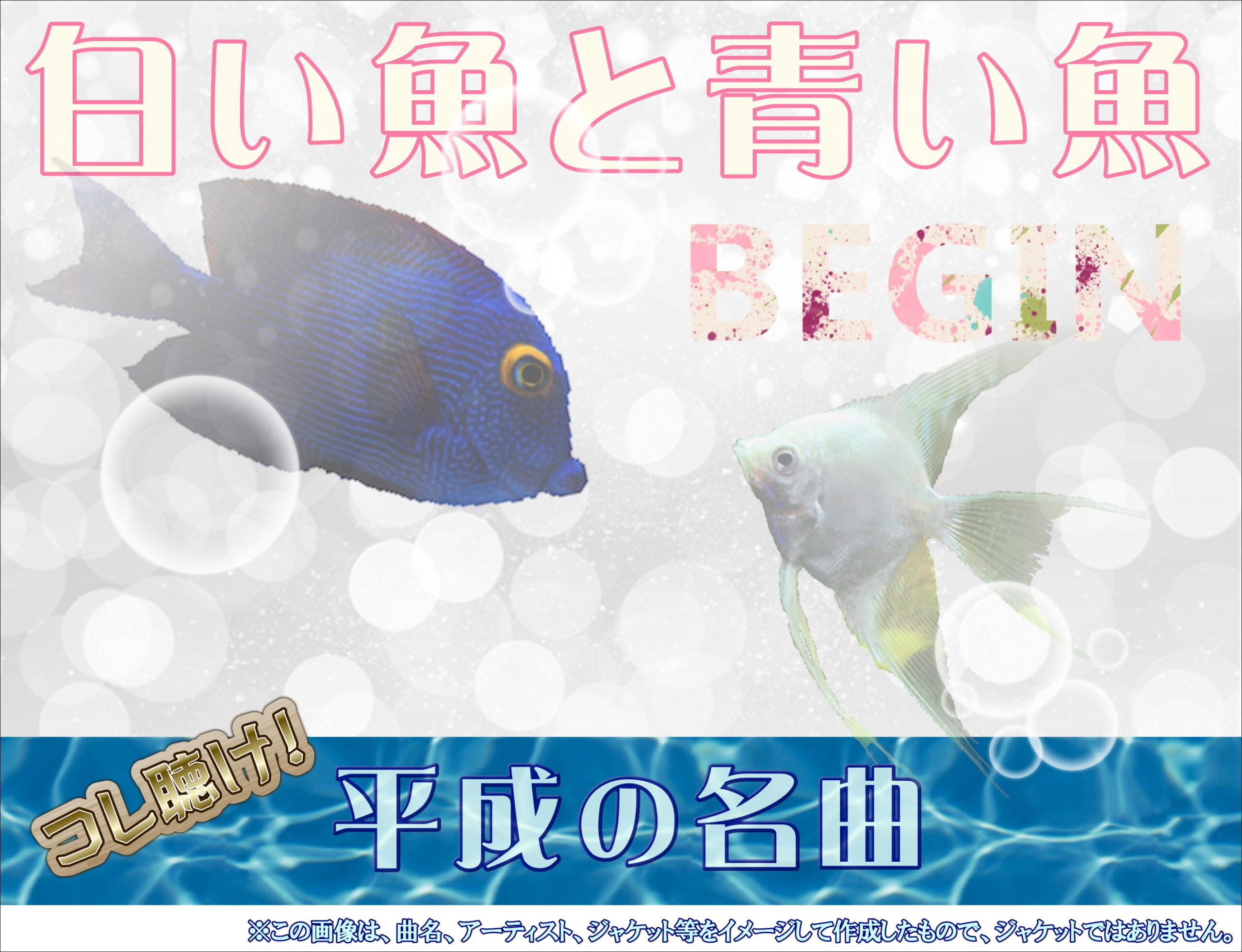 白い魚と青い魚2